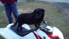 HotRod testing out quads..seeing which one fits him Oregon Dunes, Hot Rods, Fitness, Dogs, Pet Dogs, Doggies