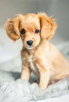 aww... 😍❤️  #dog #dogs #dogsperts #pet #love #doglovers #cute #cuteness #puppies #pup #pups #happydog #lovemydog #happiness