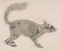Resultado de imagen para 19 century taxonomy