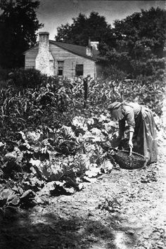 woman working in her garden, 1901 Antique Photos, Vintage Pictures, Vintage Photographs, Old Pictures, Old Photos, Appalachian People, Appalachian Mountains, Pioneer Life, Vintage Farm