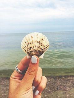 beautyand-bliss: Cape scallop