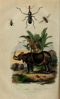 Rhinoceros - high resolution image from old book. Plant Painting, Old Book Pages, Rhinoceros, Art Clipart, Picture Collection, Antique Prints, Scrapbook Paper Crafts, Science And Nature, Natural History