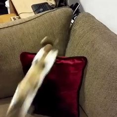 My cat is distracted when no one sees it