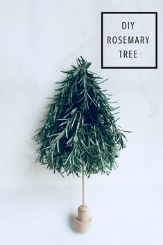 DIY Scandinavian Rosemary Tree . Perfect holiday centerpiece! Takes only 5 minutes -Mamma Mode