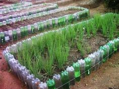 idei practice Raised Herb Garden, Veg Garden, Vegetable Garden Design, Garden Care, Tropical Landscaping, Front Yard Landscaping, Vegetable Garden Planner, Recycled Garden, Bottle Garden