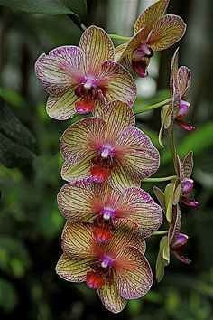 Phalenopsis - I have had one of these for almost 4 years.  It blooms almost continuously.