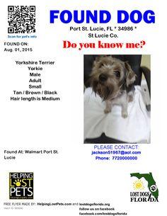 Found Dog - Yorkshire Terrier Yorkie - Port St. Lucie, FL, United States