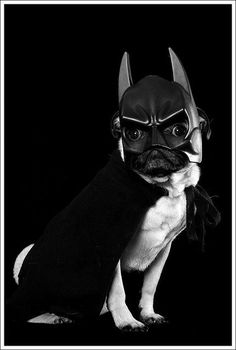 I'm Batpug! awesome!