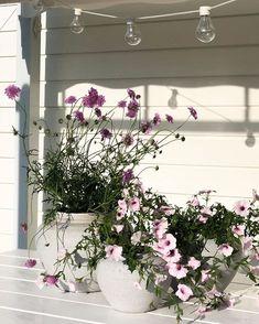 Wreaths, Plants, Instagram, Home Decor, Decoration Home, Door Wreaths, Room Decor, Deco Mesh Wreaths, Plant