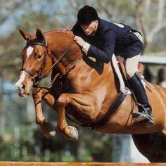 Horse Horses Horses