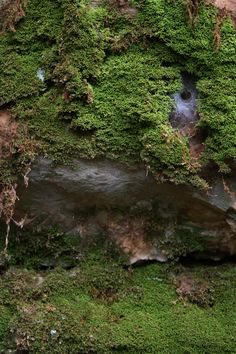 Lost River Cave, surface trails, Bowling Green, Ky.