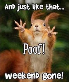gsd germanshepherd schferhund pastoralemao pastoraleman dog dogs pet pets bergerallemand pastoredesco doggo chien thanos_the_doggo vatothedog fun funny funnyfriday laugh meme joke sarcasm humor lmao rofl lol weekend humour memes tgif Weekend Quotes, Monday Quotes, Motivational Monday, Monday Memes, Funny Animal Jokes, Cute Funny Animals, Memes Humor, Sarcasm Humor, Funny Good Morning Memes