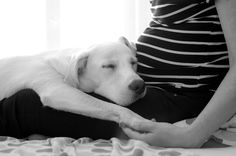 Pregnant lady & the dog Pregnant Lady, Dogs, Photography, Animals, Animais, Animales, Animaux, Doggies, Photography Business