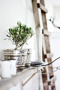 Mini olive tree in a silvery bucket / lots of white / beautiful details shabby chic Rustic French country decor idea. (indoor herb planters tin cans) Rustic French Country, French Country Decorating, Metal Tree, Olive Tree, Deco Table, Wall Sconce Lighting, Decoration, Interior Inspiration, Home Accessories