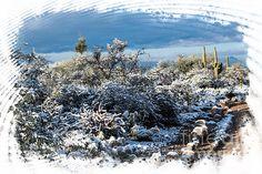 White Winter in the Desert. Tucson Arizona Photo Credit: Michael Moriarty Photography