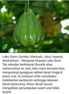 Khasiat Labu Siam... #Herbal Health And Nutrition, Health Tips, Health Fitness, Chayote Recipes, Homemade Spices, Apothecaries, Brokat, Okra, Calisthenics
