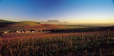 Durbanville winelands - Cape Town - table Mountain visible on the horison. Provinces Of South Africa, South Afrika, South African Wine, Wine Tourism, Best Hospitals, Table Mountain, Dream City, Most Beautiful Cities, Cape Town