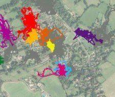 ¿Dónde van los gatos domésticos durante el día? GPS revelan su vida secreta