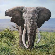 Eric Wilson - Peintre Animalier - Elephant