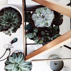 take some plants and create a beautiful home   interior inspiration