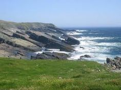newfoundland pictures - Google Search