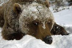 Na Pavla medveď sa na druhý bok obráti