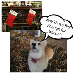 Corgi Comics: December Roundup and Outtakes