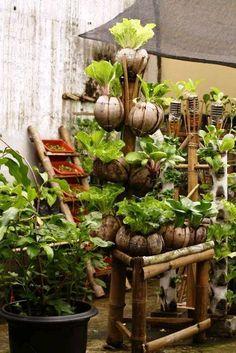 coconut husk as a pot cocopot