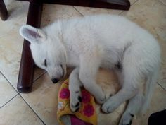 I like sleeping with your slipper. Do you have some for me ? #Desan# :)