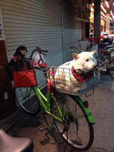 Dogs waiting in bicycle baskets in Kuromon Market, Osaka, Japan.