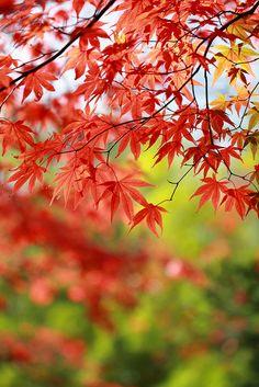 Hakone #japan #kanagawa