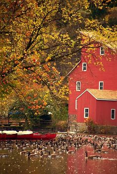 Fall in Vermont is where I want to be <3