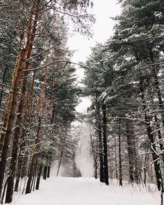 Winter Trails to Enjoy in the St. Nordic Lodge, Nordic Skiing, Minnesota Funny, Stillwater Minnesota, Lake Elmo, Pine Trees Forest, Local Parks, County Park, Get Outdoors