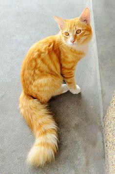Meet to my Fresh fox cat http://ift.tt/2id5hVc