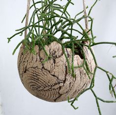 **Kleine Blumenampel aus Keramik in Kugelform. Für kleine Pflanzen geeignet.** Die Blumenampel hängt an 3 Stricken, die mit kleinen Tonkügelchen versehen sind. Außen ist die Ampel mit einer...