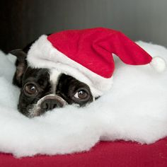 Cute Dogs in Santa Hats Pictures | POPSUGAR Pets