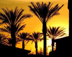 Gilbert, AZ : Gilbert sunset