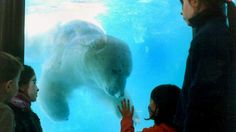 HATE ZOOS!!! RIP Winner The Polar Bear Dies In Heat Wave!!!!!  The last remaining polar bear at Buenos Aires zoo has died in a heat wave.    Zoo officials say 'Winner' became nervous and irritated amid the scorching heat and the noise from fireworks during Christmas Eve celebrations.