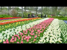 Keukenhof - Garden of Europe  Keukenhof, also known as the Garden of Europe, is situated near Lisse, Netherlands, and is the world's largest flower garden. According to the official website for the Keukenhof Park, approximately 7,000,000 (seven million) flower bulbs are planted annually in the park, which covers an area of 32 hectares.