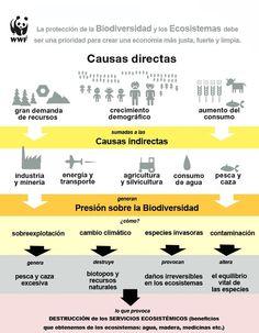 Causas directas e indirectas que afectan la biodiversidad y los ecosistemas. #SalvemosElPlaneta
