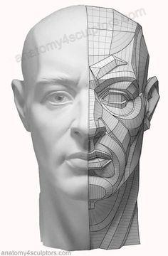 https://www.facebook.com/Anatomy4Sculptors/photos/a.314803788618777.65280.306580462774443/728751157224036/?type=1:
