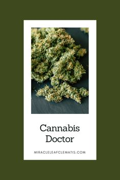Miracle Leaf in West Palm Beach is your 1st stop when getting your medical marijuana card in Florida. Visit one of #MiracleLeaf's medical #marijuanadoctors to start the legal process of using medical marijuana as a form of health treatment. #FloridaMarijuana #MedicalMarijuanaCardWestPalmBeach #MiracleLeafClematis Perfect Image, Perfect Photo, Love Photos, Cool Pictures, Doctor In, West Palm Beach, Medical Marijuana, Florida, Awesome