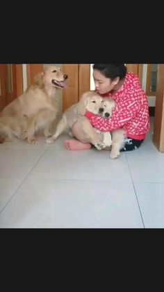 Jealous dogs 😅