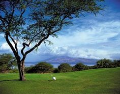 Hawaii - Four Seasons Resort Maui at Wailea