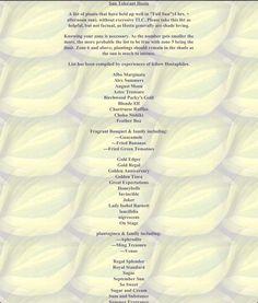 List of Full Sun tolerant Hostas  (4+ hours of afternoon sun)