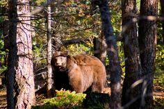 Woodland Park Colorado - Bing Images
