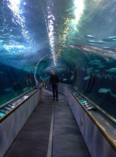 Aquarium of the Bay at Pier 39.