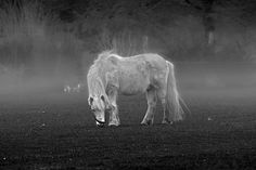 White horse in the mist ... - Location scouting of the author theater & film maker composer and creative director Sebastian Ugovsky in the North of Germany ...