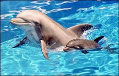 Mom and baby dolphin people watching lesson.    #dolphin  @hpman