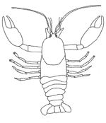 Crayfish info & coloring page (also follow links on page to frog/fish/insect coloring sheets)